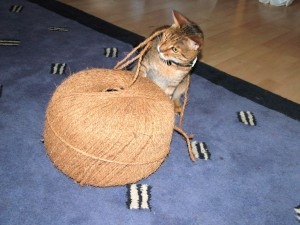cat with big ball of string