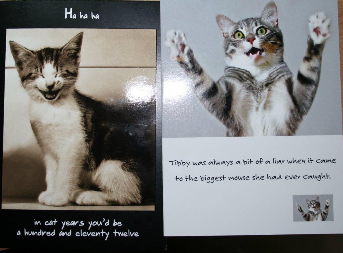 The Way Here Some More Funny Cat Cards That Daddycat Got Late