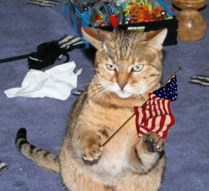Bengal-cat-with-USA-American-flag