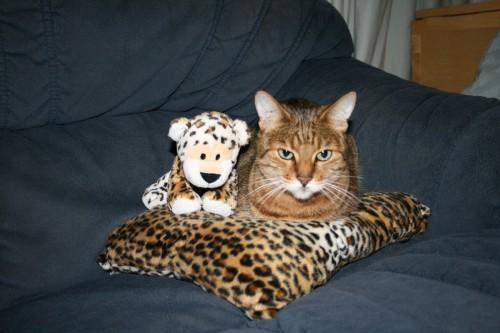 Bengal cat with pretend kitten