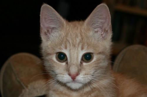cat turner