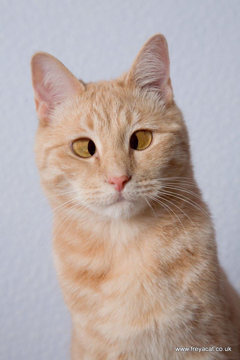 bulk cat litter