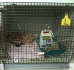 teego cat on a drip monitored at vet