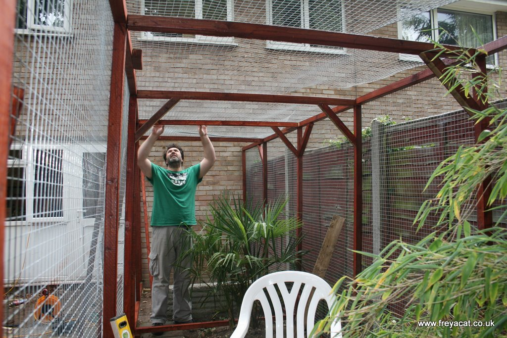 How To Build A Catio Part 2 A Cat Called Freya And