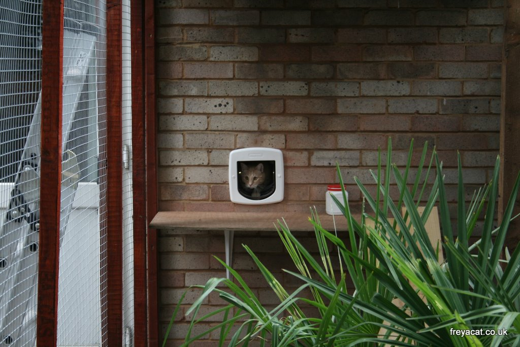 how to build a catio pictures to pin on pinterest